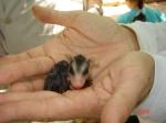 opossum3_Setz