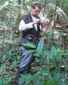 Wesley Dáttilo collecting ant-plant interactions in the southern Brazilian Amazon