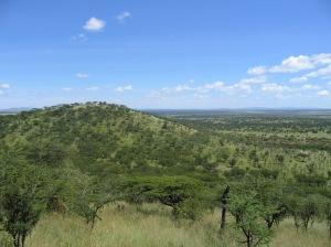 Tropical savanna woodland, Serengeti National Park