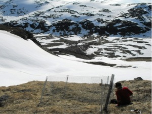 A fence against large mammalian herbivores in a study plot at a high altitude site. Early summer visit to the study sites to record signs of winter herbivory and check the condition of the fences.