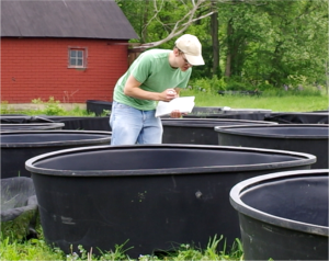 Brad Carlson observes tadpole behavior in mesocosms.