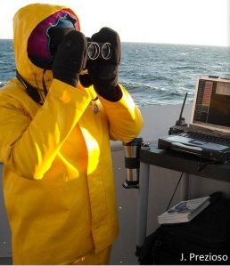 The first author, Holly Goyert, observing for seabirds, marine mammals, and tunas during a pelagic survey