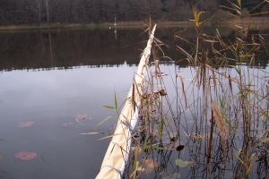 Photo 1: Maize added into the littoral zone. The rope prevents it from floating into the open water.