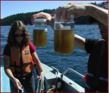 Researchers from the Friday Harbor Laboratories collect 'raw' POM samples. The complex mixture in these jars was dissected using counts and diverse biomarkers. Photo: A. Lowe.