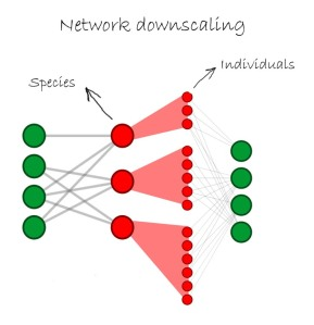 Network downscaling. In traditional species-based networks each node represents a species (red nodes are pollinators and green ones are plants), but if we decompose a species into its constituting individuals we can obtain an individual-based network. In the figure, downscaling is only represented for the pollinator subset.