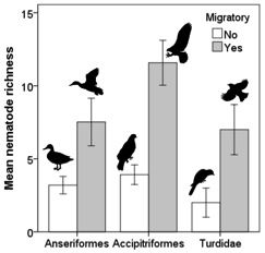 Fig. 2: Mean nematode species richness (corrected for host study effort) + S.E. for migratory and resident bird species in the Anseriformes, Accipitriformes, and Turdidae (N = 188).